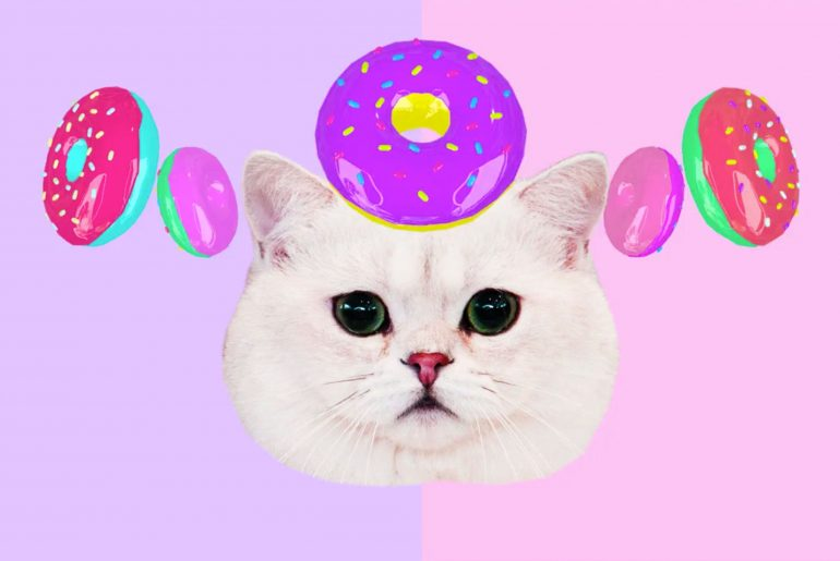A cat has donuts spinning around its head